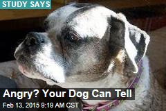 Angry? Your Dog Can Tell