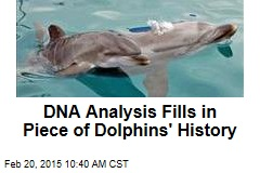 DNA Analysis Fills in Piece of Dolphins' History