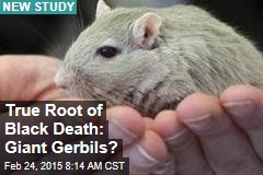 True Root of Black Death: Giant Gerbils?