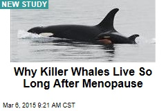 Why Killer Whales Live So Long After Menopause
