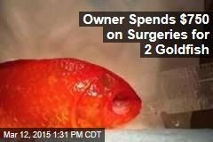 Owner Spends $750 on Surgeries for 2 Goldfish