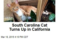 South Carolina Cat Turns Up in California