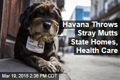 Havana Throws Stray Mutts State Homes, Health Care