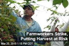 Farmworkers Strike, Putting Harvest at Risk