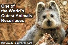 One of the World's Cutest Animals Resurfaces