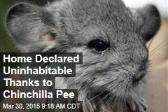 Home Declared Uninhabitable Thanks to Chinchilla Pee