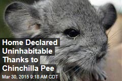 Home Declared Uninhabitable Thanks to Chinchilla Pee
