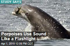 Porpoises Use Sound Like a Flashlight