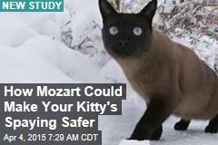 How Mozart Could Make Your Kitty's Spaying Safer