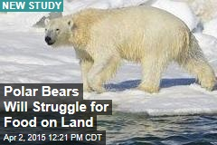 Polar Bears Will Struggle for Food on Land