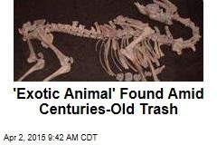 'Exotic Animal' Found Amid Centuries-Old Trash