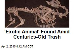'Exotic Animal' Found Amid Centuries-Old Trash
