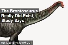 The Brontosaurus Really Did Exist, Study Says