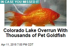 Colorado Lake Overrun With Thousands of Pet Goldfish