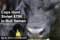 Cops Hunt Stolen $70K in Bull Semen