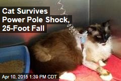 Cat Survives Power Pole Shock, 25-Foot Fall