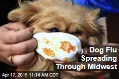 Dog Flu Spreading Through Midwest