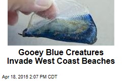 Gooey Blue Creatures Invade West Coast Beaches