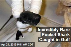 Incredibly Rare Pocket Shark Caught in Gulf