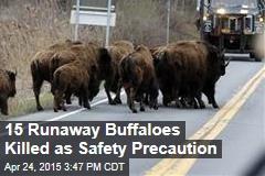 15 Runaway Buffaloes Killed as Safety Precaution