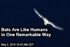 Bats Are Like Humans in One Remarkable Way