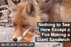 Nothing to See Here Except a Fox Making a Giant Sandwich