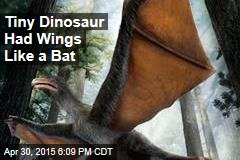 Tiny Dinosaur Had Wings Like a Bat