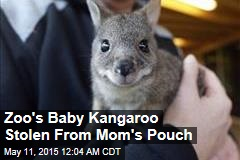 Zoo's Baby Kangaroo Stolen From Mom's Pouch