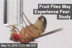 Fruit Flies May Experience Fear: Study