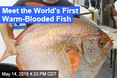 Meet the World's First Warm-Blooded Fish