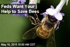 Feds Want Your Help to Save Bees