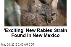 'Exciting' New Rabies Strain Found in New Mexico