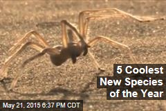 5 Coolest New Species of the Year
