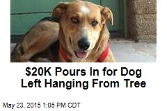 $20K Pours In for Dog Left Hanging From Tree