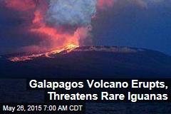 Galapagos Volcano Erupts, Threatens Rare Iguanas