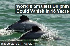 World's Smallest Dolphin Could Vanish in 15 Years