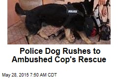 Police Dog Rushes to Ambushed Cop's Rescue