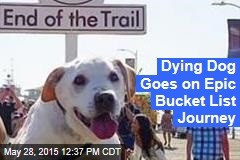 Dying Dog Goes on Epic Bucket List Journey