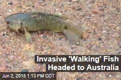 Invasive 'Walking' Fish Headed to Australia