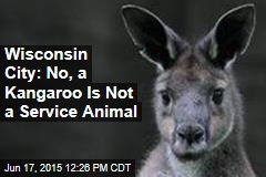 Wisconsin City: No, a Kangaroo Is Not a Service Animal