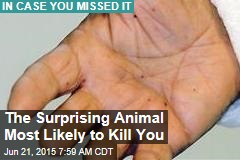The Surprising Animal Most Likely to Kill You
