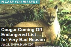 Cougar Coming Off Endangered List ... for a Very Bad Reason