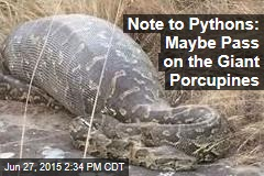 Note to Pythons: Maybe Pass on the Giant Porcupines