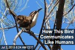 How This Bird Communicates Like Humans