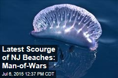 Latest Scourge of NJ Beaches: Man-of-Wars