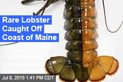 Rare Lobster Caught Off Coast of Maine