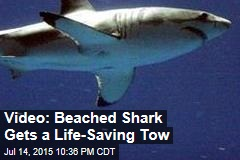 Video: Beached Shark Gets a Life-Saving Tow