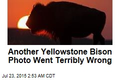 Selfie Gone Wrong is Park's 5th Bison Attack This Year