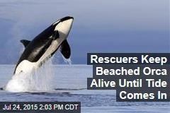 Rescuers Keep Beached Orca Alive Until Tide Comes In