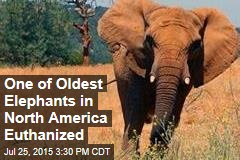 One of Oldest Elephants in North America Euthanized